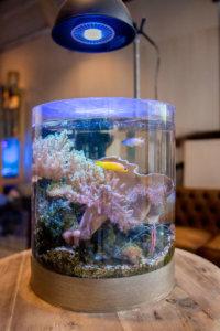 水換え不要の海水魚水槽 展示中の円柱